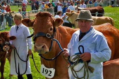 121st Devon County Show | John Fowler Devon Holiday Parks