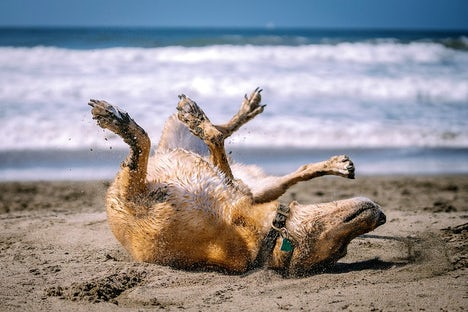 Paws On The Beach | John Fowler Devon Holiday Parks