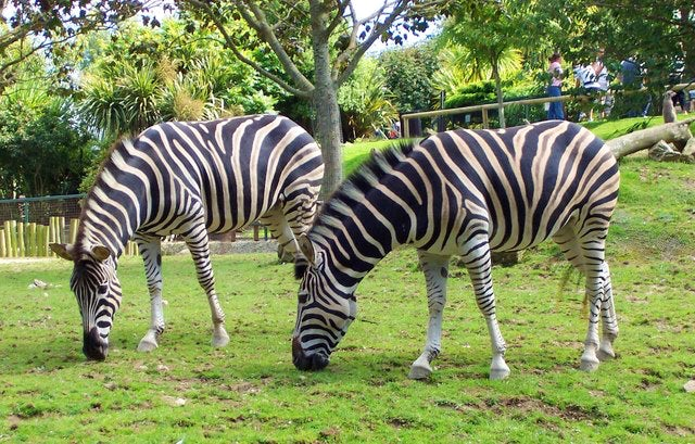 Newquay Zoo | Wildlife attractions in Cornwall