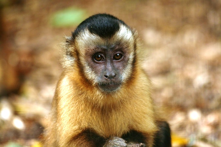 The Monkey Sanctuary | Wildlife attractions in Cornwall