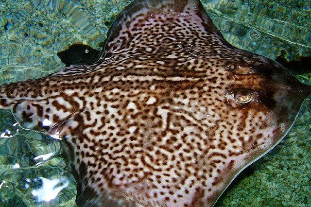 Blue Reef Aquarium | Wildlife attractions in Cornwall
