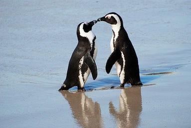 Cornish Penguin Love Story | John Fowler Family Holidays