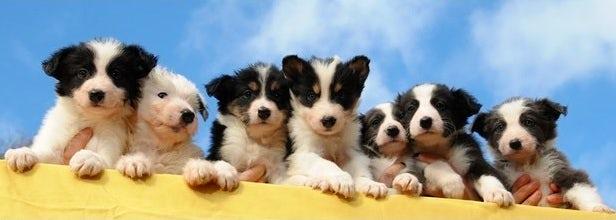 Devon Kardashian Puppies | John Fowler Dog Friendly Holiday Parks