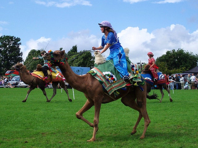 Camel Racing | last minute caravan holidays for Point-to-Point