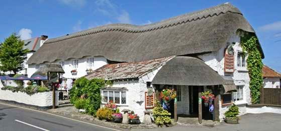 The Thatch | holidays with dogs