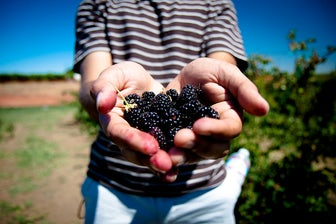 Blackberry Picking | Top 10 Autumn Bucket List Activities