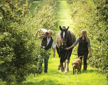 Healey's Cornish Cyder Farm | 5 Dog Friendly Days Out Cornwall