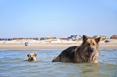 Swimming | Dog Friendly Water Sports