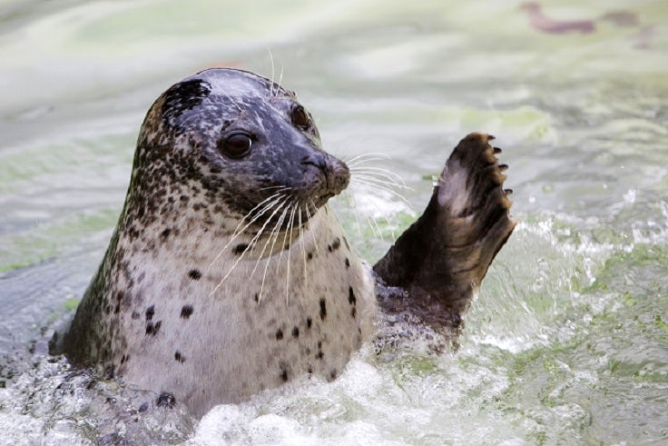 Cornish Seal Sanctuary | Wildlife attractions in Cornwall