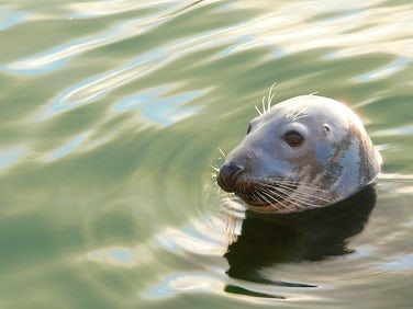 Sea Watching Cornwall Wildlife Trust | John Fowler Cheap Family Holidays