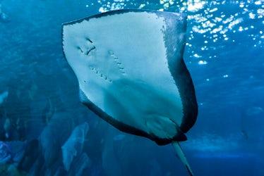 National Marine Aquarium | Top 5 Wet Weather Attractions In Devon