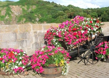 Ilfracombe In Bloom | John Fowler Family Holidays