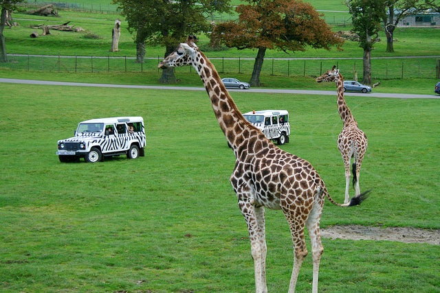 Longleat Safari Park | Family attractions in Somerset