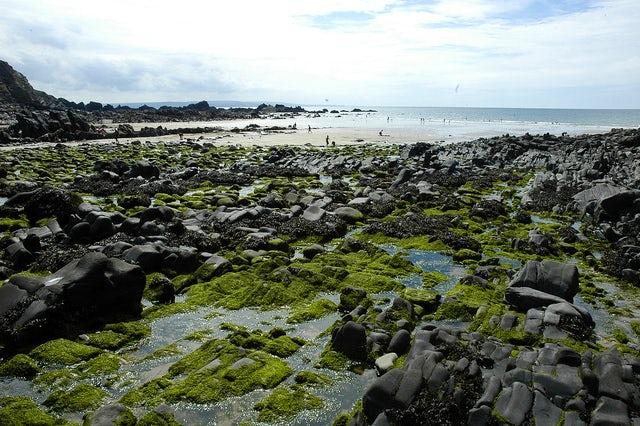 Duckpool Beach | Rock Pooling in Cornwall