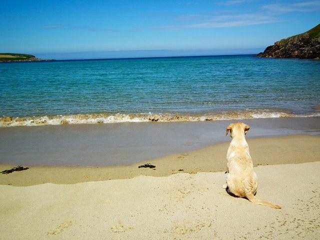 Beach Labrador | last minute caravan