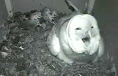 Somerset Barn Owls | John Fowler Somerset Holiday Parks